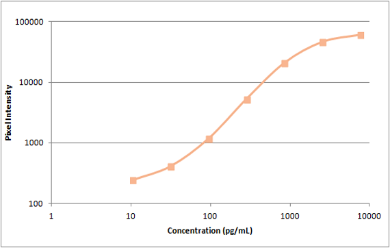 Human TIMP-1 Standard Curve