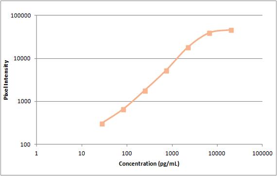 Human TIMP-2 Standard Curve