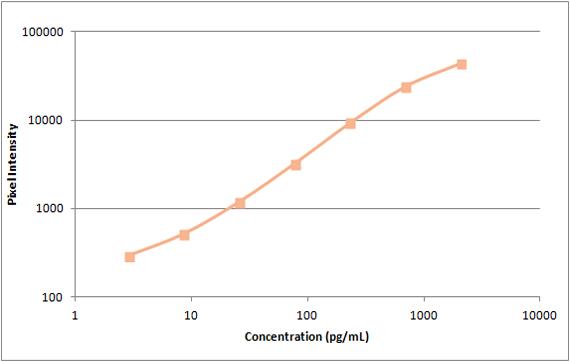 Human VEGF Standard Curve