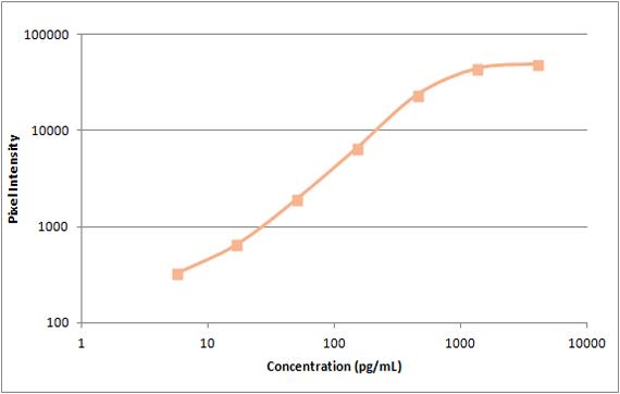 human IP-10 standard curve
