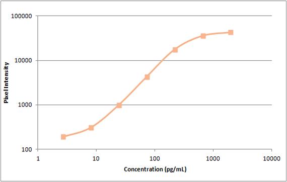 human MCP-1 standard curve